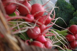 Radis produits de l'agriculture locale