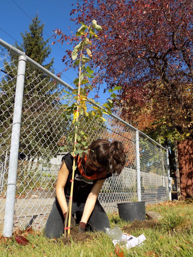 Une femme plante un arbre