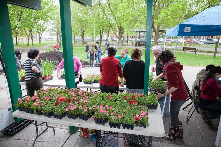 Photo de la distribution des fleurs aux citoyens