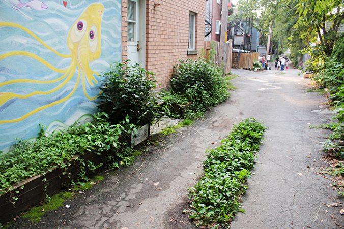 Photo d'une ruelle verte dans MHM