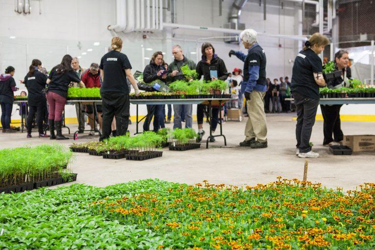 distribution de fleurs et de compost