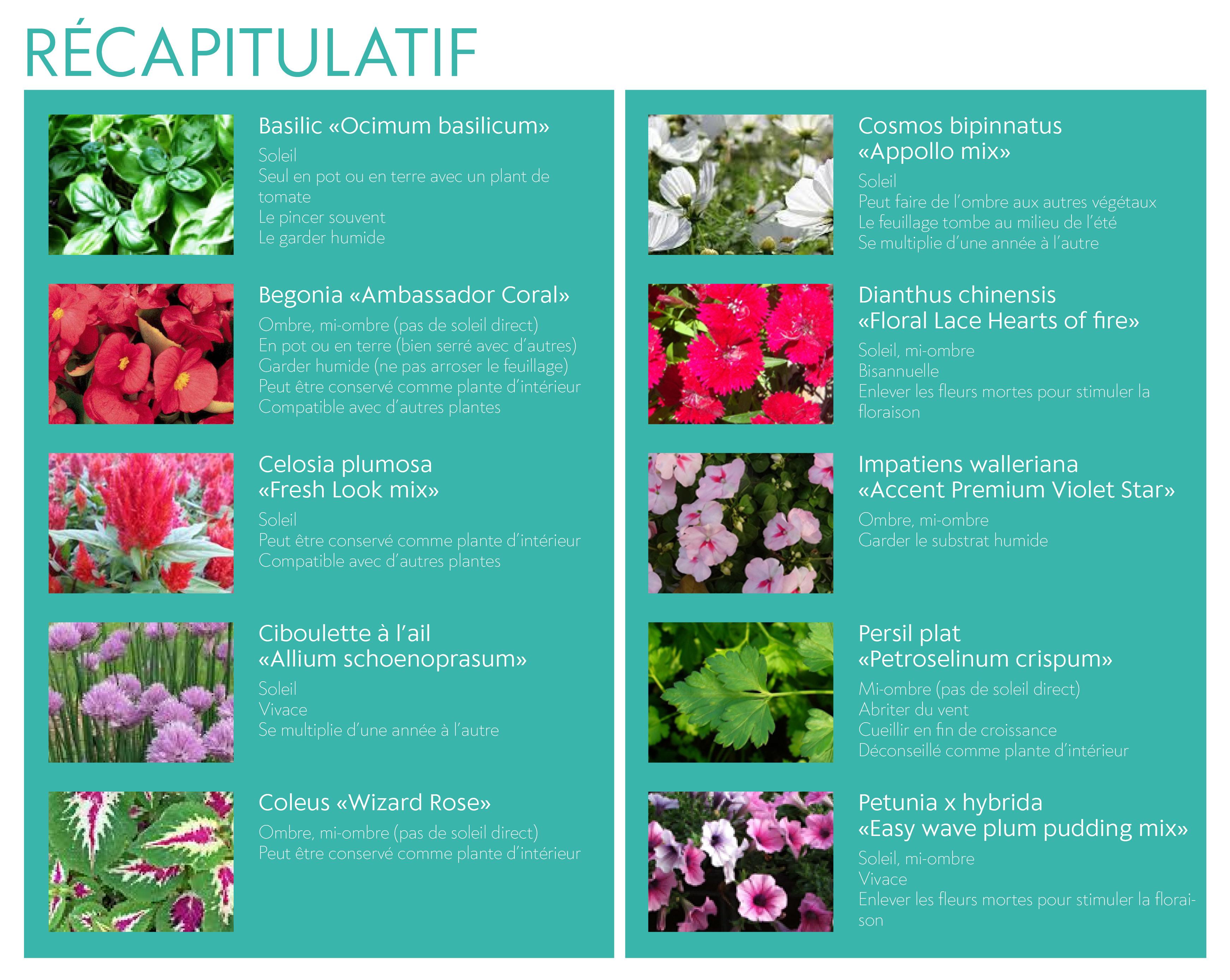 Plante Exterieur Qui Aime L Eau distribution de fleurs et de compost: les conseils de notre